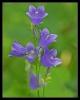 Fleurs_142