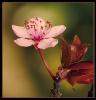Fleurs_145