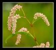 Fleurs_149