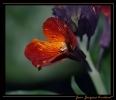 Fleurs_150