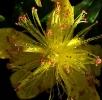 Fleurs_221