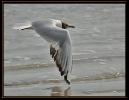 Oiseaux_103