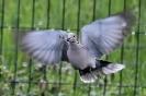 Oiseaux_123