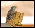 Oiseaux_49