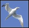 Oiseaux_60