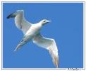 Oiseaux_61