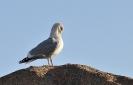 Oiseaux_68