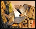 Oiseaux_98