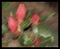Photos peintures_4
