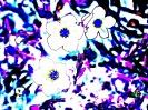 Travail sur fleurs_15