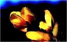 Travail sur fleurs_20