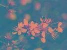 Travail sur fleurs_3