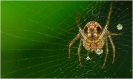 Insectes divers_134