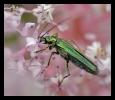 Insectes divers_137