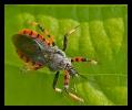 Insectes divers_139