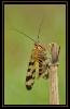 Insectes divers_140
