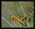 Insectes divers_141