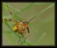 Insectes divers_142