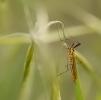 Insectes divers_148