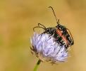 Insectes divers_149