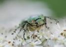 Insectes divers_155