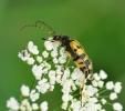 Insectes divers_157