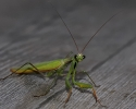 Insectes divers_166
