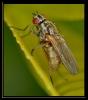 Insectes divers_169
