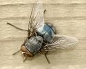 Insectes divers_170