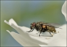 Insectes divers_171