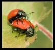 Insectes divers