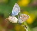 Papillons_120