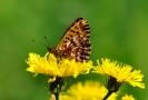 Papillons_123