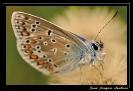 Papillons_68