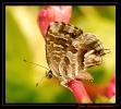Papillons_69
