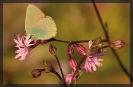 Papillons_75