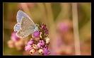 Papillons_77