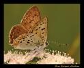 Papillons_78