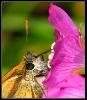 Papillons_79