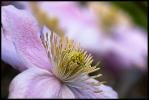 fleur perros_1
