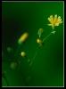 Fleurs_130