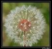 Fleurs_131