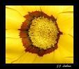 Fleurs_135