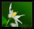Fleurs_140