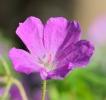 Fleurs_199