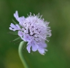 Fleurs_205