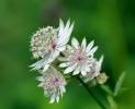 Fleurs_206