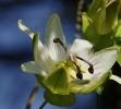 Fleurs_217