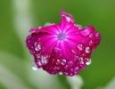Fleurs_222