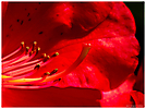 Fleurs jardin_1